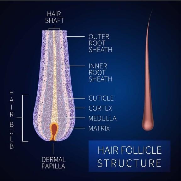 Aufbau eines Haars zum besseren Verständnis bei Haarausfall